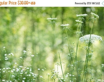 ON SALE Queen Anne's Lace, Queen Annes Lace Flower Print, Flowers, Nature, Nature Photography, Home Decor, Flower Pictures