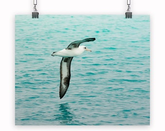 Bird Photography, Wall Art, Fine Art, Canvas Print, Bird, Albatross, Wings, Nature, Ocean, Wildlife, Waves, Fly, Soar, Travel, Conservation