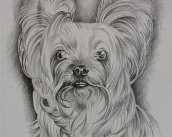 Graphite Pencil Pet Portrait