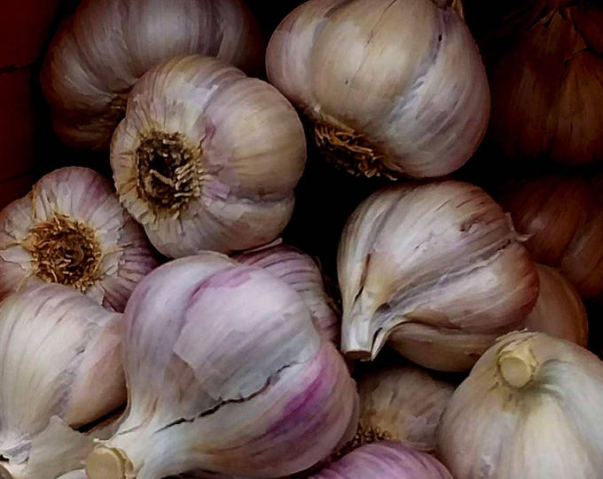 German Extra Hardy Garlic Bulbs Organic Grown Gourmet - 1 lb. For Planting or Cooking - Fall Shipping Non-GMO