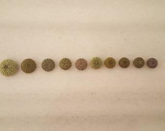 10pcs tiny green sea urchins, Summer collection, a real sea treasure.