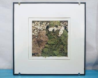 Framed Moss Art-White Matting