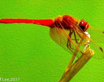Red Dragonfly on Stick