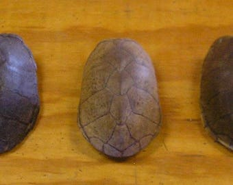 3 Large Stink Pot Turtle Shells