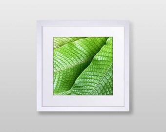 Botanical Photography Wall Art
