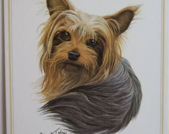 Greeting Card//Yorkshire Terrier Greeting Card//Quay Greeting card