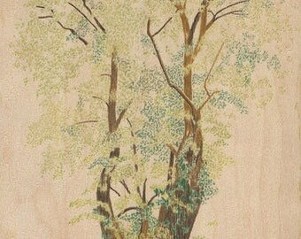Angsana Tree (Original)