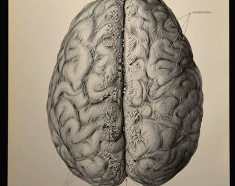 Human Brain Wall Art Human Anatomy Print Medical Wall Decor