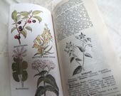 1934 The Herbalist Hardcover Guide Book - Plant Identification Medicine Pharmacy Antique Apothecary