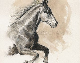NEW - Study of freedom - galloping horse animal