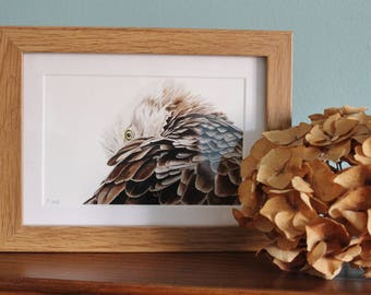 Eagle Watercolour Painting - Bird of Prey - Framed Eagle giclee print - Bird Art Picture - Picture and gift for the home