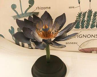 Biologicial Model Brendel style Waterlily