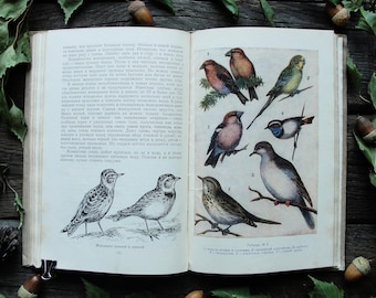 Tips for the Naturalist-Amateur - 6 Color Drawings - Hardcover - Vintage Animal Book, 1956. Fish Birds Amphibians Frogs Illustration Print