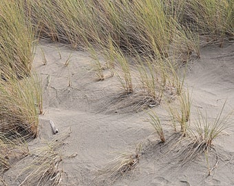 Sand, Wind and Grass on the beach and sand dune