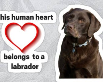 Labrador sticker, labrador decal, labrador stickers, dog stickers, laptop sticker, This human heart belongs to labrador stickers