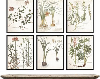 Vintage Botanical Print Set - Extra Large Print Set - Botanical Prints - Vintage Wall Art Print - Antique Botanical Prints - VintageWall Art