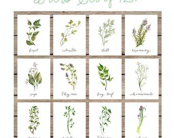 Botanical Print Set, Herb Print Set, Herbs, Botanical Prints, Herb Decor, Herb Wall Art, Botanical Wall Art, Herb Printables, Herb Set Of 12