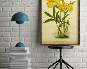 Antique Orchid print flowers, Yellow flower print, wall art decor, Botanical print, Home Office decor poster, Vintage illustrations poster