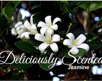 JASMINE Fragrance Oil 2 or 4 oz for candles, soap, perfume oil, cosmetics, soap making, best, concentrated, pure, skin safe, supply, DIY