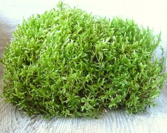 Green Moss/50-100 grams/Real Forest Moss/Natural Dried Moss/Natural green Moss