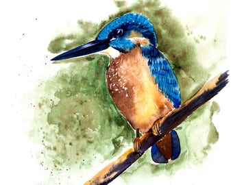 Kingfisher bird Watercolor Print, Realistic Watercolor bird Print, Blue bird art wall bird lover print artwork decor, bird art collector