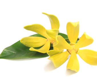 Aromatherapy TC Ylang Ylang Essential Oil (15ml/0.51oz)