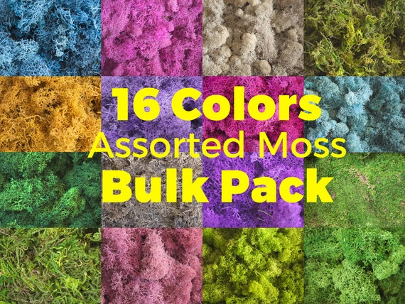 16 Assorted Color Preserved Moss Bulk Pack Reindeer Moss Dried