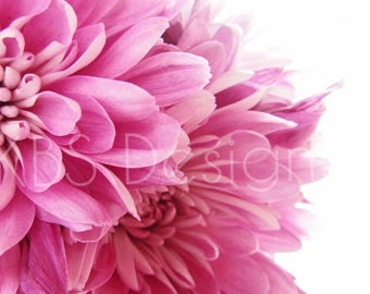 Pink Flowers Close Up /Stock Photos/ Styled Photo Background/ Social Media/ Styled Stock Photography
