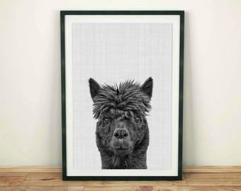 Llama Print, Llama Wall Art, Printable Wall Art, Alpaca Print, Digital Download, Black and White, Llama Printable, South American Animal Art