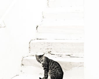 Cats and Stairs, Greece