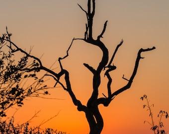 Zimbabwe Silhouette Photo Print