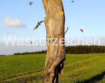 Unshakeable tree