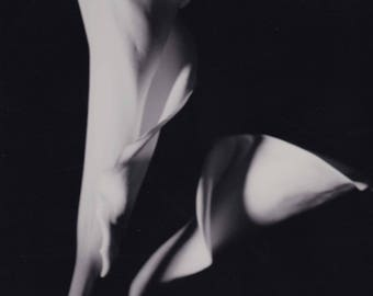 Spiral Calla Lilies Black and White Photography