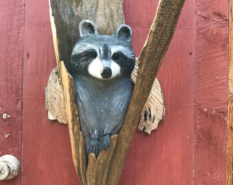 Raccoon in a cypress knee, hand carved wall hanging
