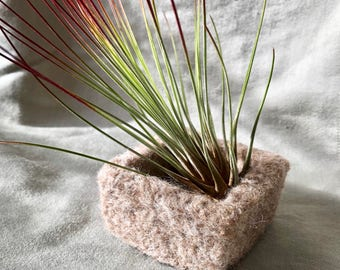 Square felted wool bowl with air plant
