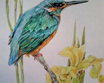 Kingfisher and Iris, pastel pencils, gouache, shades of blue greens and yellows, white mount 14 x 11, original painting.
