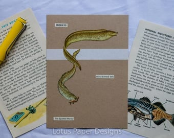 Handmade Blank Greeting Card (Flat A6) - Spotted Moray - Golden Guide to FISHES