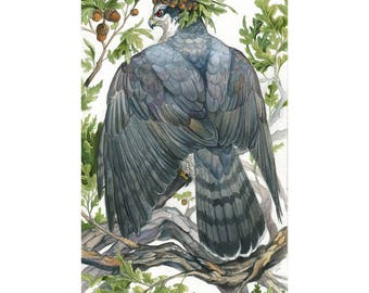 Quercus - Fantasy Goshawk Print - Wildlife Raptor Art with Acorns and Oak Leaves