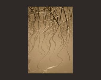 Photo of Reeds Reflected in Water, Soft Wavy Golden Reflections, Bronze Sepia Colored Archival Photo Print, Semi Abstract Nature Wall Art