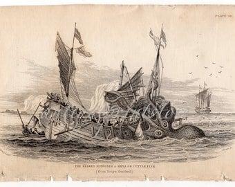 c. 1833 THE KRAKEN ENGRAVING - original antique print - rare antique sea monster by Jardine - supposed sepia or cuttle fish