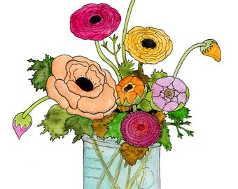 Ranunculus Illustration