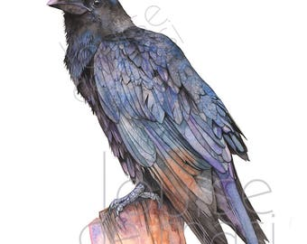 Crow print of watercolor painting, 5 by 7, C22517, Raven print, Crow watercolor painting print, Raven watercolor painting, Louise De Masi ©
