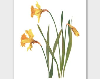 """Daffodils Wall Decor (Yellow Flower Minimalist Art, French Country Chic, Botanical Print) --- 8x10 or 11x14 """"King Alfred"""""""