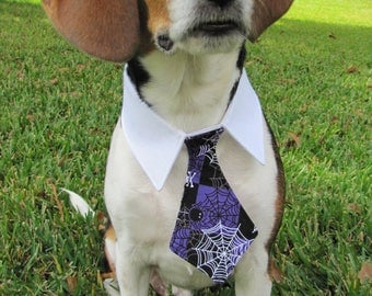 Purple Spiderweb Bow Tie, Necktie, or Bow on a Shirt Style Collar for both Dogs & Cats