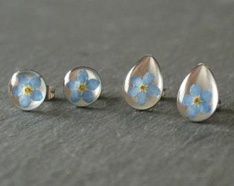Real Forget Me Not Stud Earrings,  Resin Earrings, Flower Earrings, Surgical steel. Free UK Post