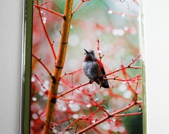 Humming Bird Photography Card