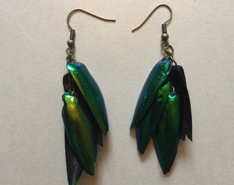 Real jewel beetle wing dangle drop earrings stunning colours emerald green