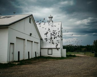 Thunder Storm Birds Barn Fine Art Print