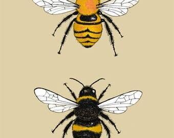 Bumble Bee Entomology Illustration A4 Print