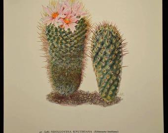Cactus Wall Decor Cacti Art Print Nature Print Art Botanical